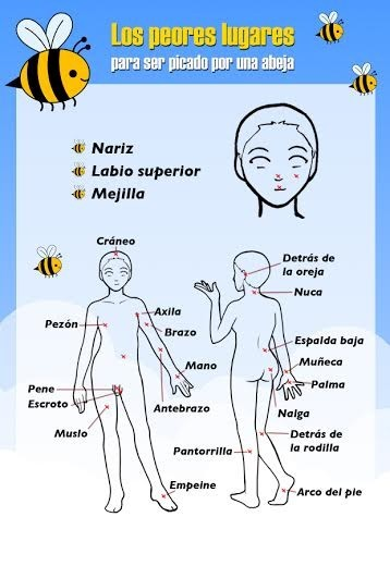 Top de peores lugares del cuerpo donde te puede picar una abeja ...