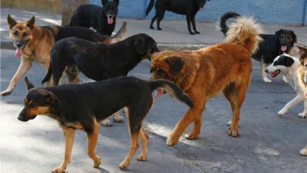 Alistan pasarela de perros callejeros para su adopción en Naucalpan