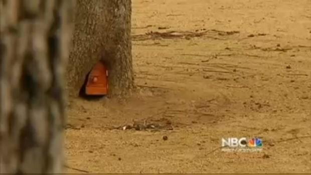 VIDEO: Encuentran casa de duendes en Estados Unidos