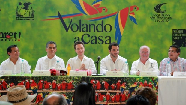 Encabeza Manuel Velasco liberación de 20 guacamayas rojas en peligro de extinción