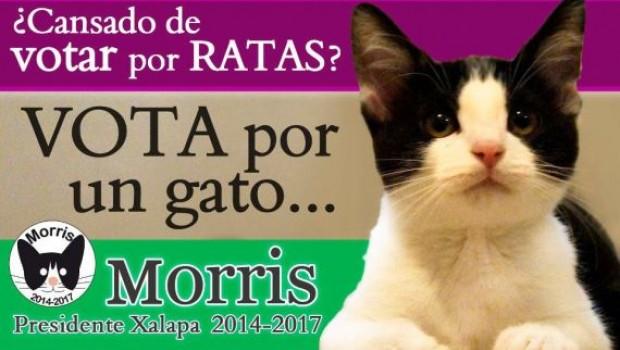 Morris el gato político que promete dormir y no hacer nada: prensa internacional