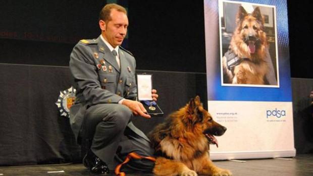 Condecoran a Ajax, perro que salvó vidas al detectar un explosivo