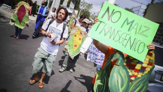 No se ha autorizado la siembra de transgénicos en México: Sagarpa