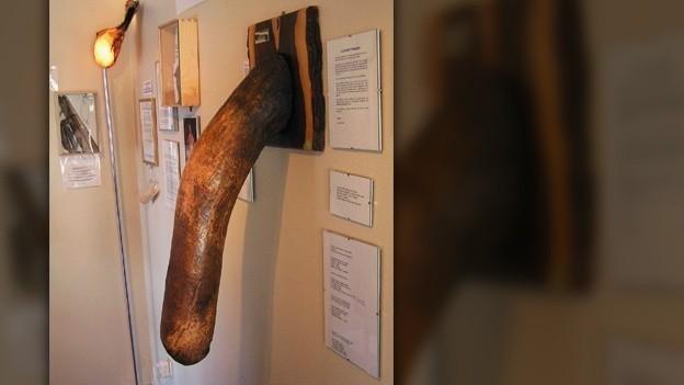 museo de penes