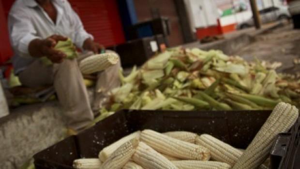 ¿Qué pasa con el maíz transgénico en México?