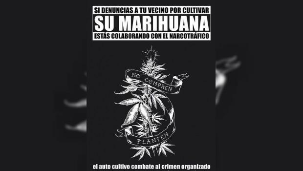 Difunden campaña en redes sociales a favor del autocultivo de mariguana en México