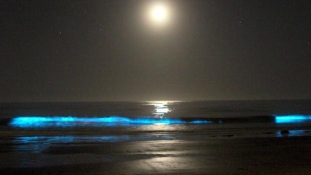 Se apaga laguna bioluminiscente casi única en el mundo
