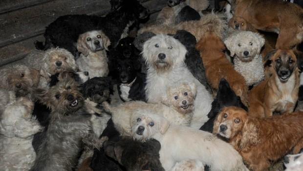 Por orden de Laura Bozzo, desalojan albergue de perros y gatos en Santa María la Ribera