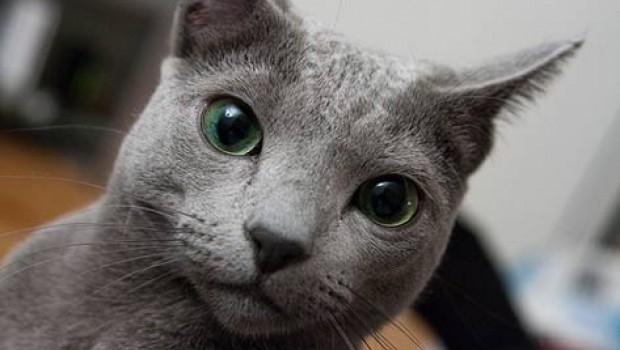 Para no estornudar, adopten gatos