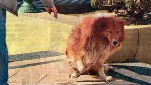 Hombre que ató hocico a su perrita irá a la cárcel | Blog de los Animales - Página 10 180602_c701.jpg_88717827_principal