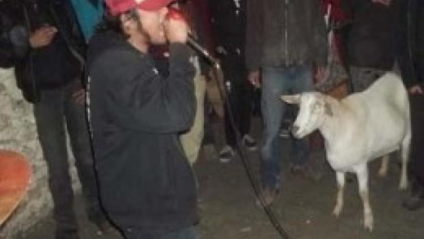 Muere celebre cabra