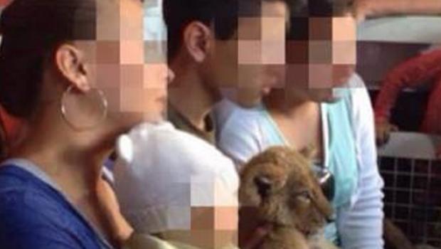 Como si fuera un peluche: Explotan a cachorro de león en Feria de Guanajuato