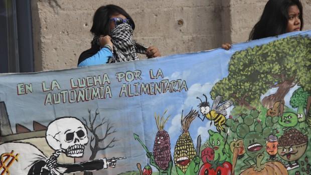 Mayas de Holpechén, Campeche ganan amparo contra Monsanto