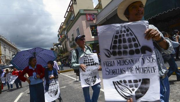 Monsanto presiona  para permitir siembra de transgénicos en México, advierten