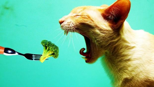 Vuelven a su gato vegano y muere