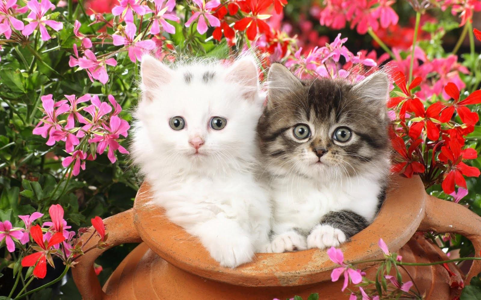Feliz Día del Gato! Te presentamos los cinco favoritos de las redes ...