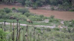 La mina Buenavista del Cobre, subsidiaria de Grupo México derramó de 40 mil metros cúbicos de sulfato de cobre en el río Bacanuchi, afluente del Sonora. Foto/Cuartoscuro