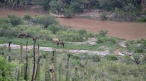 El daño se extendió a 3 cuerpos de agua: son Arroyo Tinajas, río Bacanuchi y el río Sonora. Foto/Cuartoscuro