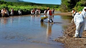 (@TVMX1) El gobierno de Sonora mantiene las labores de limpieza en el río Sonora