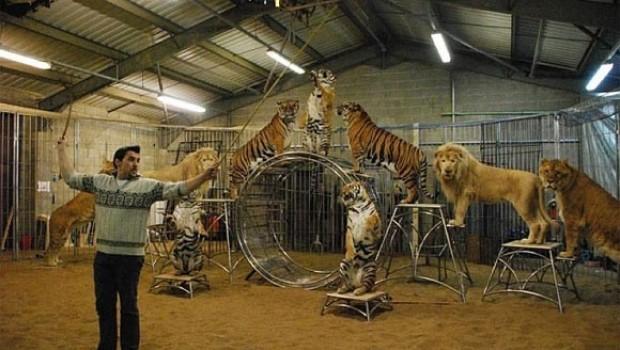 Rechazan amparo de cirqueros contra el uso de animales en DF y Morelos