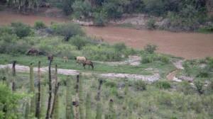 Como parte de las acciones tras el derrame de 40 mil metros cúbicos de Sulfato de Cobre Acidulados a los ríos Bacanuchi y Sonora, se clausuró la operación del área de