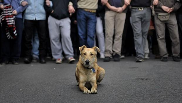 Fallece Lukanikos, el perro de las protestas griegas