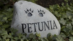 Dile adiós a tu mascota con un bonito homenaje.